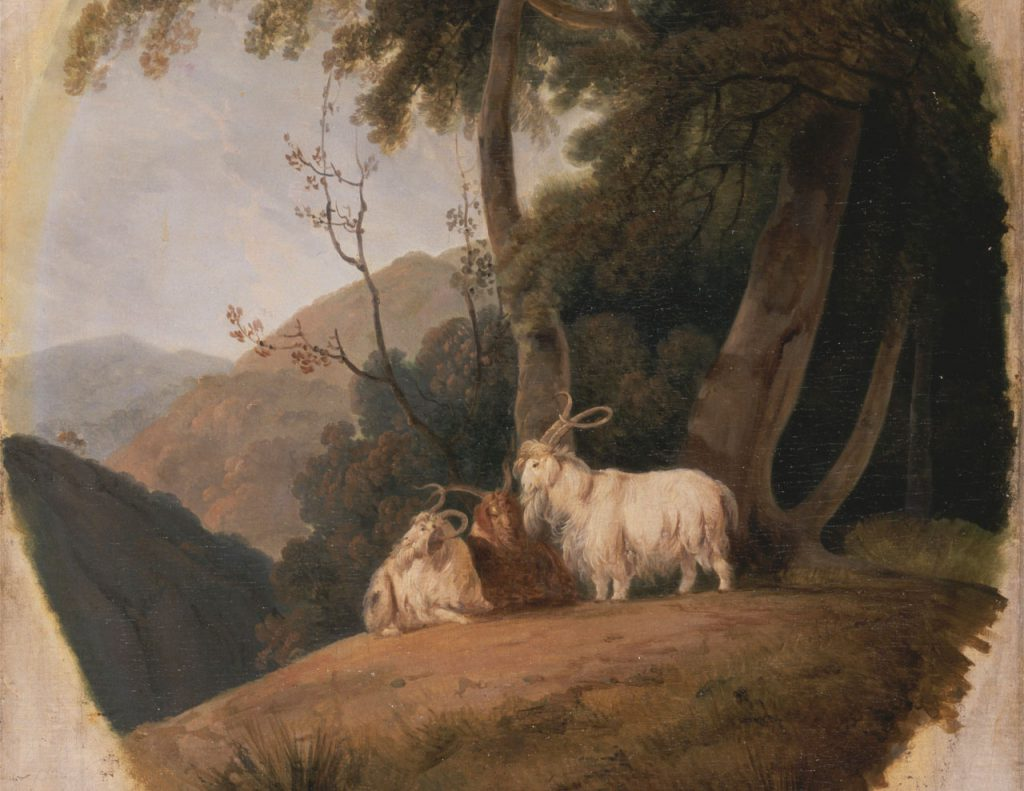 All you need to know about the Pashm fibre- Pashmina Goats, William Daniell, 1769-1837