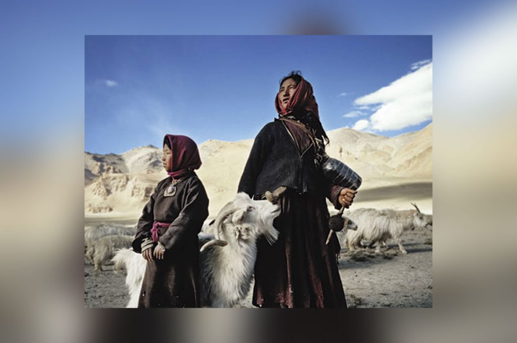 Changpa Tribe - The trail of India's Cashmere goat men