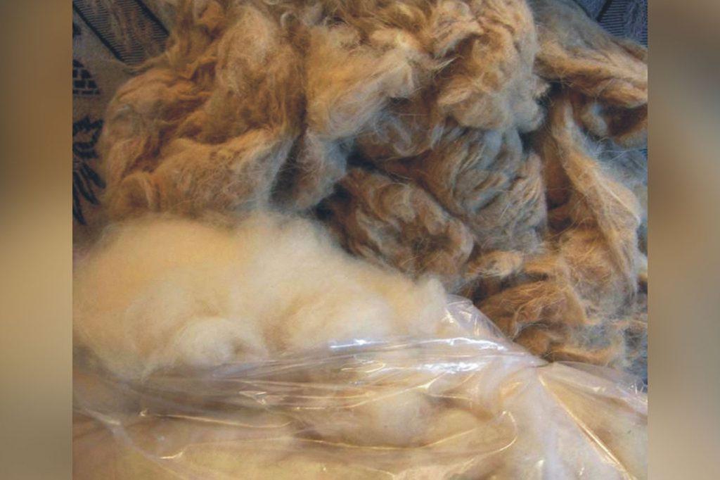 Cashmere fibre comparison All you need to know about the Pashm fibre